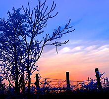 December Sunset by NatureGreeting Cards ©ccwri