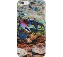 Fiddler Crab on the Rocks  iPhone Case/Skin