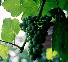 Grapes by eclectickimmer