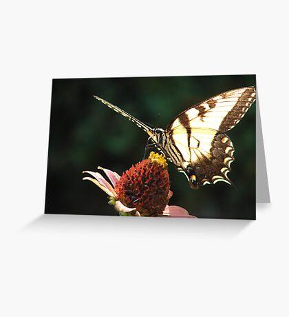 Neighborhood Butterfly Greeting Card