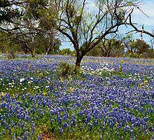 Bluebonnet Field by Joe Hewitt