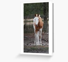 Louie Greeting Card