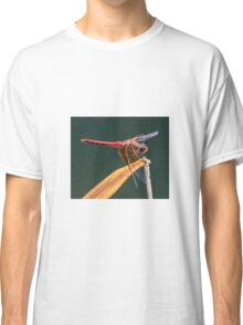 Dragonfly. Classic T-Shirt