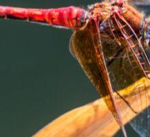 Dragonfly. Sticker
