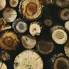 Logs by Hayely Queen