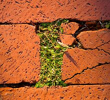 Bricks and Grass by Sandy  McClearn