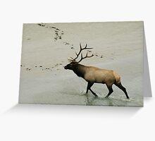 Bull Greeting Card
