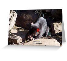 photoj Tassie Devil Greeting Card