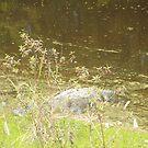 Alligator Lurking by Cyndi Jamerson