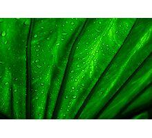 back lit green palm leaf Photographic Print