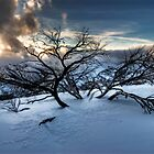 Hotham Snowfields by Robert Mullner