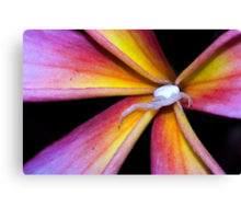 Crab Spider on Frangipani (2) Canvas Print