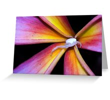 Crab Spider on Frangipani (2) Greeting Card