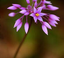 Purple Tassels by ChrisRoss