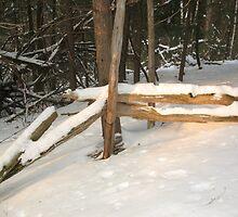 Sunny Winter Day by nikspix