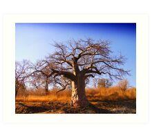 Baobab 1 Art Print