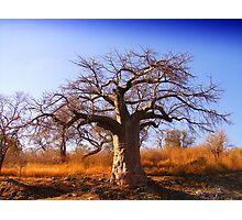 Baobab 1 Photographic Print