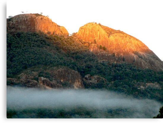Early morning fog in the Warrumbungle National Park NSW by Virginia McGowan