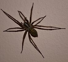 House Spider up close and Hairy, full colour version. by Raisea