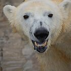 Smiling Polar by Kim Hart