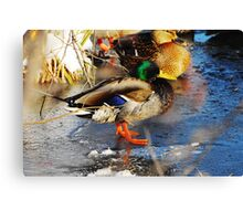I'm NOT Cold! :) Canvas Print