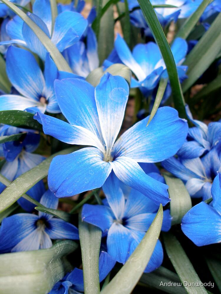 Blue Flower by Andrew Dunwoody