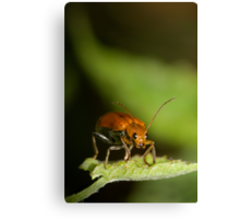 Orange Beetle Canvas Print