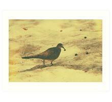 Spotted Dove v.2 Art Print