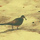 Spotted Dove v.2 by tropicalsamuelv