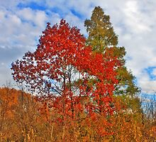 Colorful Trees And Cloudy Sky by EBArt