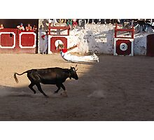 Toros Photographic Print