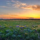 Lavender Sunset Surprise by FortPhoto