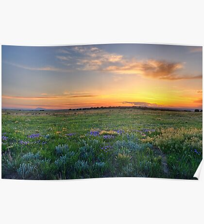Lavender Sunset Surprise Poster