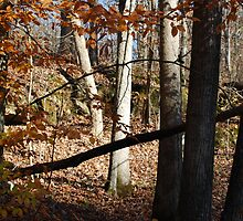 Fall in Appalachia   Copyright 2008 By PhyllisAnne Pesce by PhyllisAnne Pesce