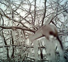 after the ice storm  by bbennett
