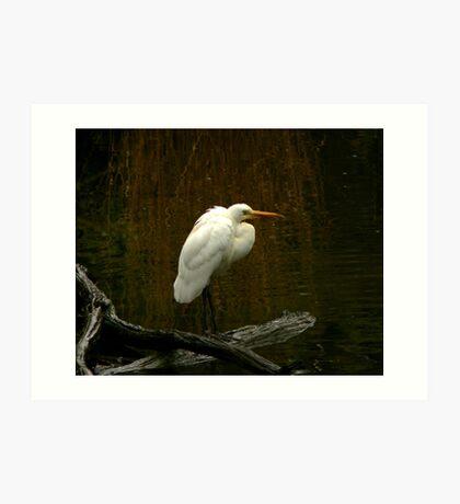 Egret Art Print
