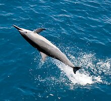 Spinner dolphin by David Wachenfeld