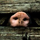 Oink oink by PhotoAmbiance