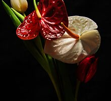 White and Red by jerry  alcantara