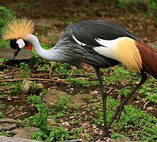 Beatiful Bird by Ismail Basymeleh