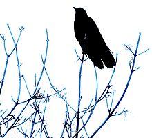 Blackbird Silloutte by hammye01