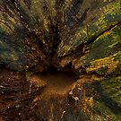 The colours of decay. by GlennRoger