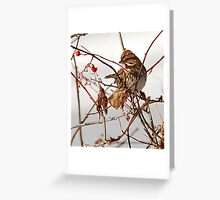 Song Sparrow & Red Berry Greeting Card