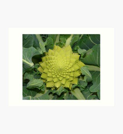 italian broccoli Art Print