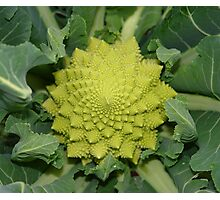 italian broccoli Photographic Print