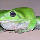 Green Frog by Bami