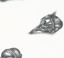 Bird skulls Sticker