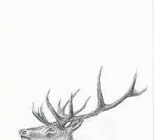 STAG by jactionman