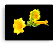 Yellow Day Lily Canvas Print