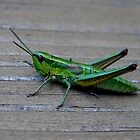 Grasshopper by Kady